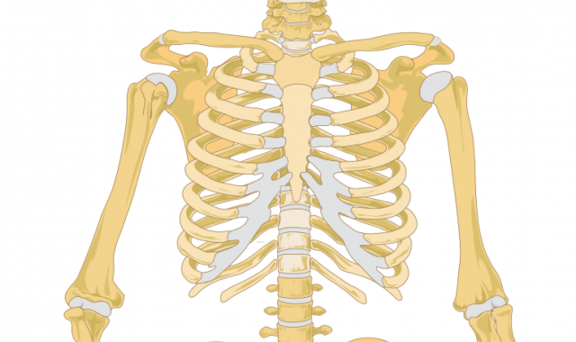 Spanish Vocabulary: Medical - The Skeletal System