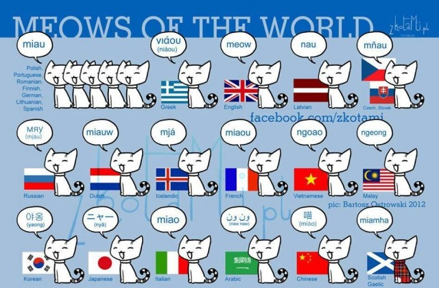 Folium: Meows of the World via zkotami