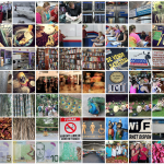 See The Flickr Gallery!