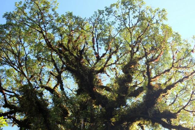 Terra: The Road To Monteverde, Costa Rica