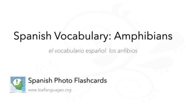 Spanish Photo Flashcards:Amphibians