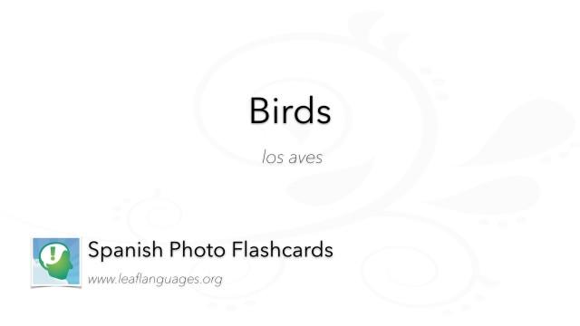 Spanish Photo Flashcards: Birds