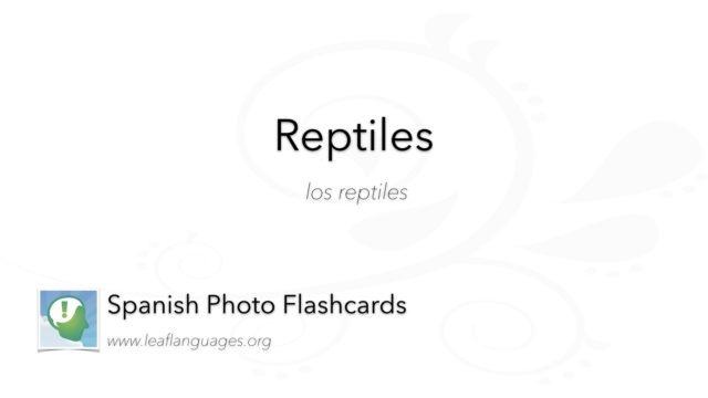 Spanish Photo Flashcards: Reptiles