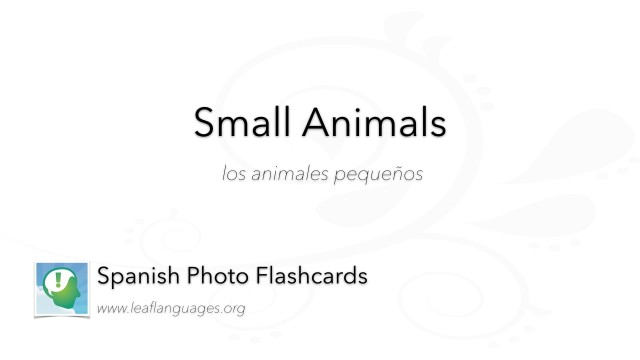 Spanish Photo Flashcards: Small Animals