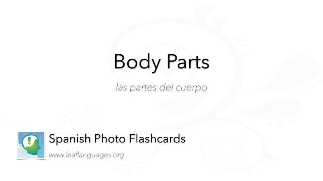 Spanish Photo Flashcards: Medical - Body Parts