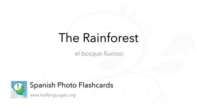 Spanish Photo Flashcards: The Rainforest