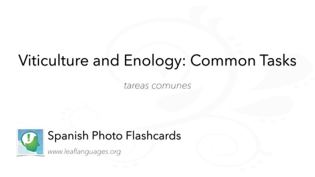 Spanish Photo Flashcards: Viticulture and Enology - Common Tasks