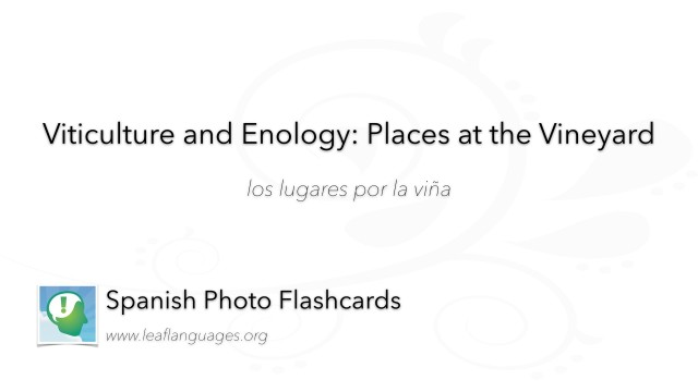 Spanish Photo Flashcards: Viticulture and Enology - Places Around the Vineyard