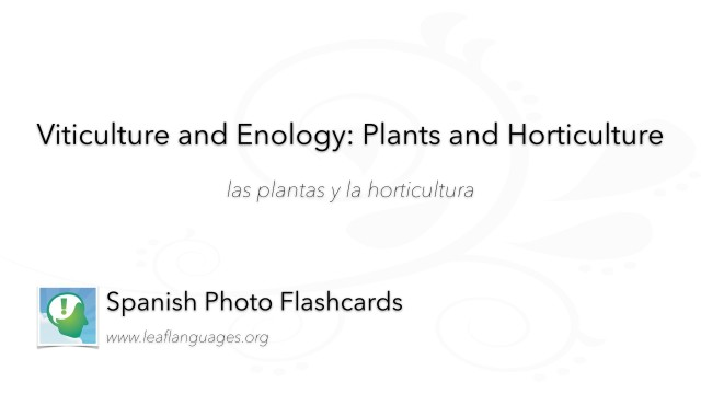 Spanish Photo Flashcards: Viticulture and Enology - Plants and Horticulture