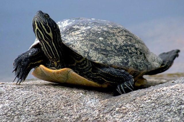 Spanish Vocabulary: Reptiles