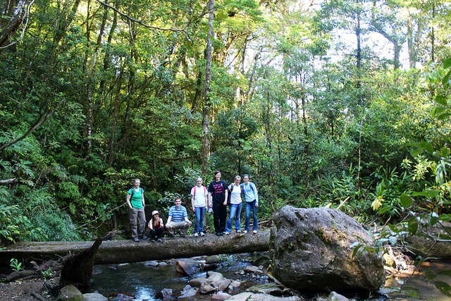 Spanish Vocabulary: The Rainforest